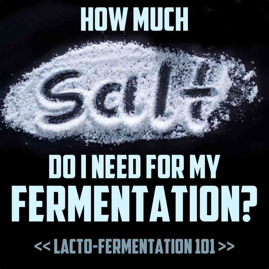 How Much Salt For Fermentation