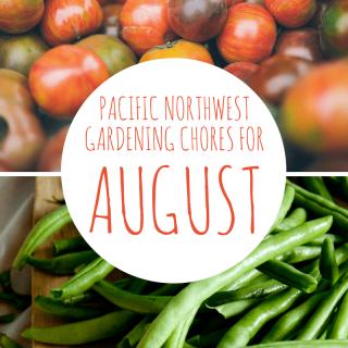 8 August Garden Chore