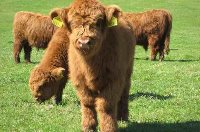 The One Livestock Animal I'm Obsessed With