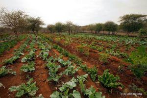 Farm Sustainable Africa Kenya Nyumbani Village
