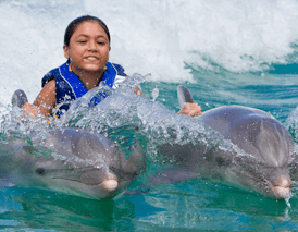 dorsal fin ride royal swim oahu hawaii