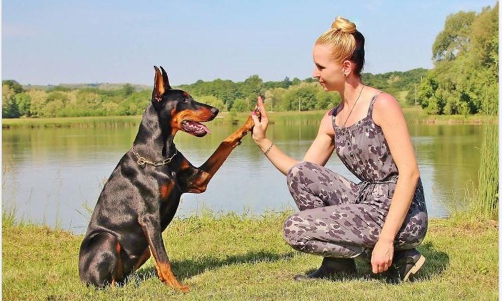 Social Animals, la primera red social para ti y tus mascotas