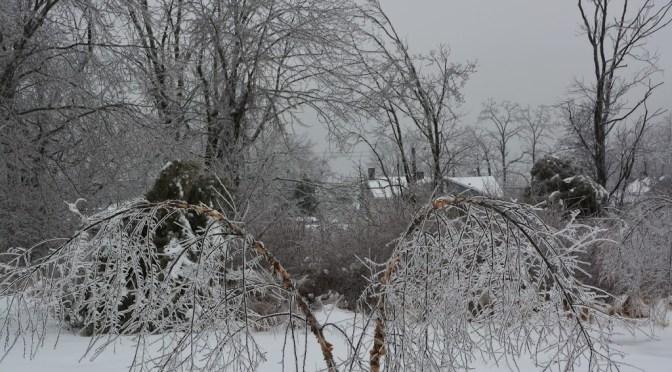 birch-ice