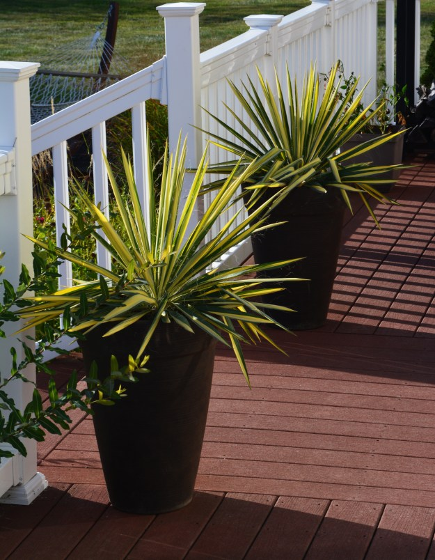 yucca-container