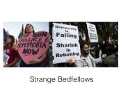 strange bedfellows.001