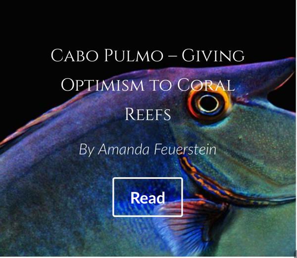 http://i2.wp.com/www.oceanoptimism.org/wp-content/uploads/2014/08/box9.png?w=600