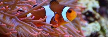 2012 – The International Aquarium Congress