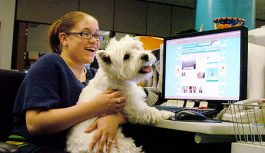 These Companies Allow Pets At Work And How!