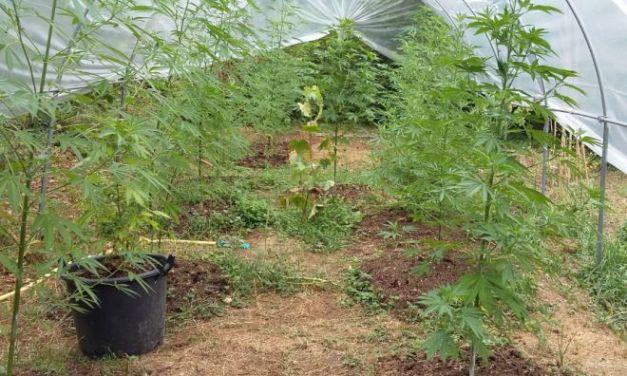 40enne di Melazzo arrestato per coltivazione di droga