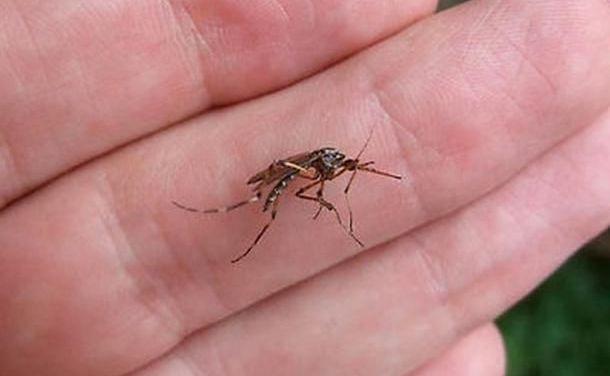 Alessandria capitale della zanzara tigre fino al 20 luglio?
