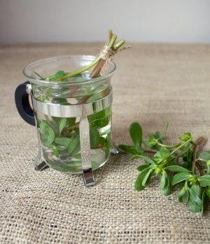 0913-purslane-tea