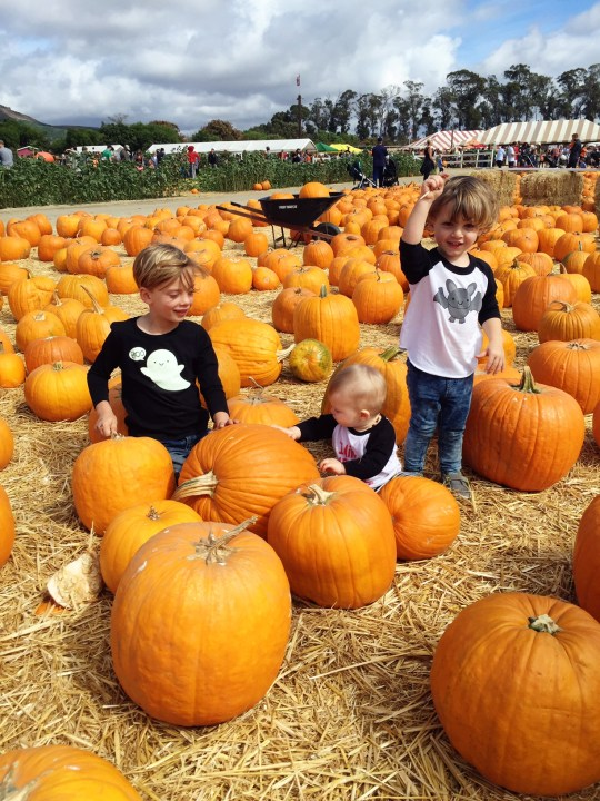 fun family fall tradition ideas and photos