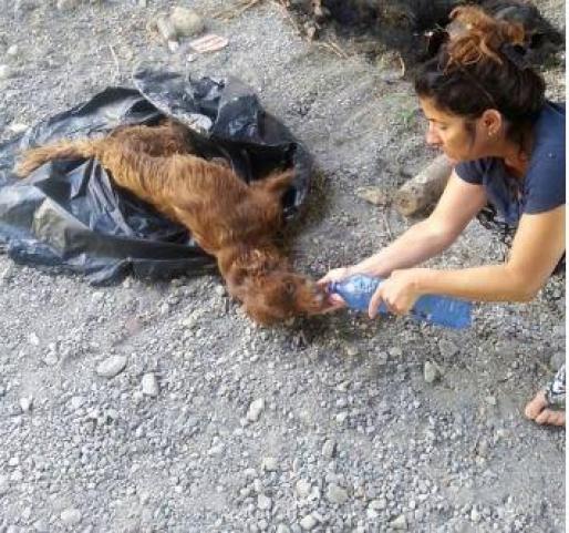 Maravillosa transformación de un perro que fue Abandonado