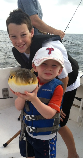 how to catch northern puffer fish