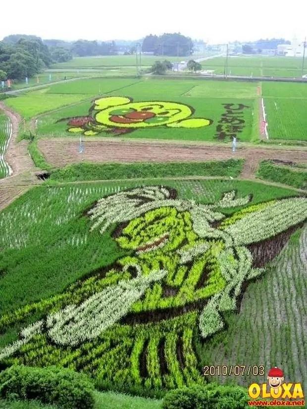 arte em plantação de arroz (14)