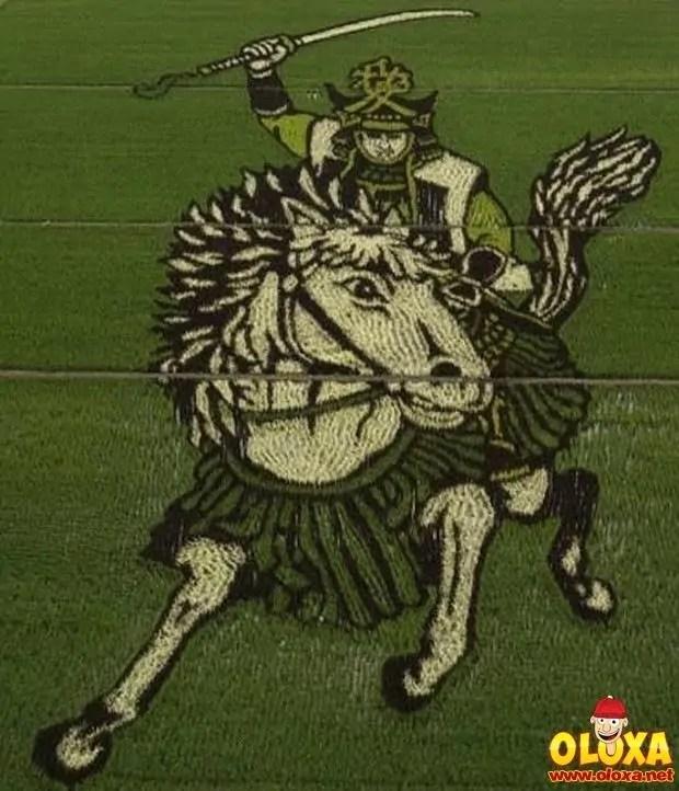 arte em plantação de arroz (22)