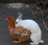 ovo de pascoa