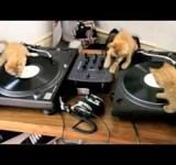 Os gatos DeeJays