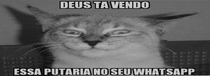 putarias no whatsapp