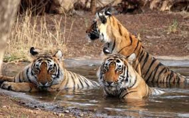 rajasthan wild life