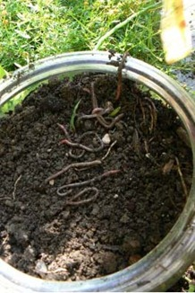 How to Make a Glass Jar Worm Garden