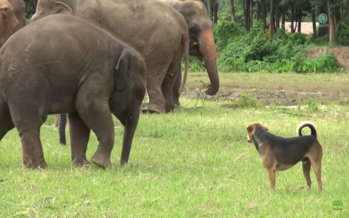 Baby elephants in love