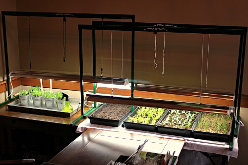indoor grow light set up