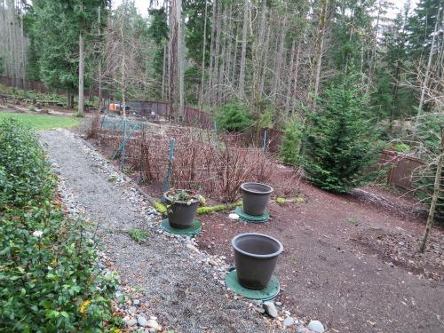 seattle garden blogs