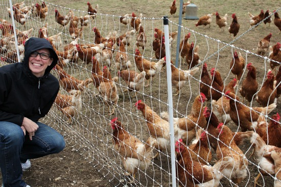eliot coleman four season farm chicken