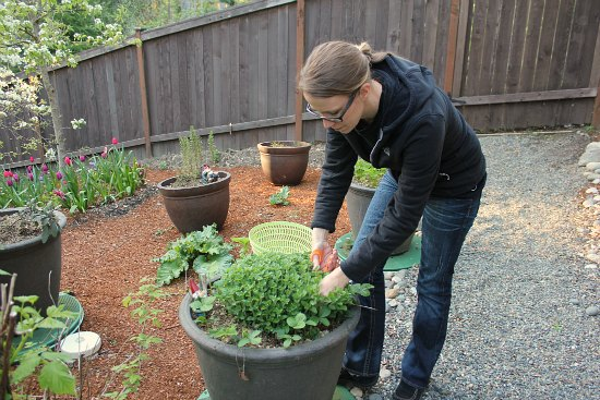 herb container garden organic