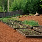 Raised Garden Beds – Growing Cabbage, Garlic, Tomatoes and More