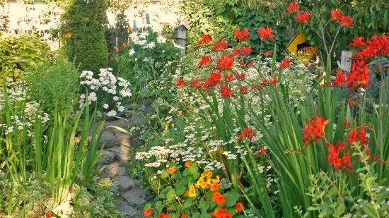 wildflower cottage garden