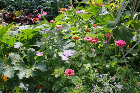 curtis garden squash