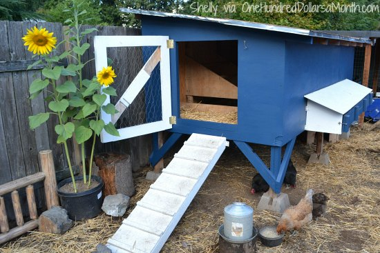 cool chicken coop photos