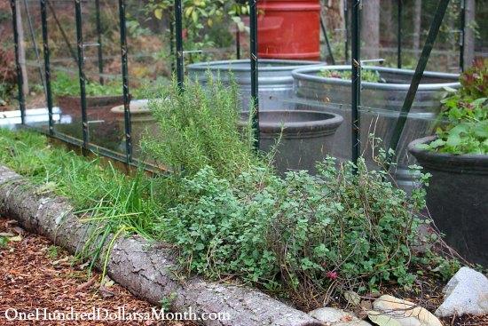 winter herbs