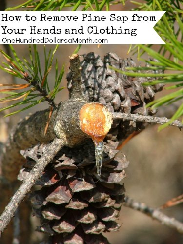 How to Remove Pine Sap from Your Hands and Clothing
