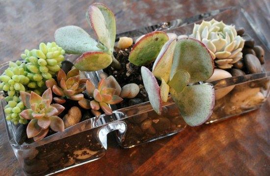 how-to-create-a-table-top-succulent-garden1