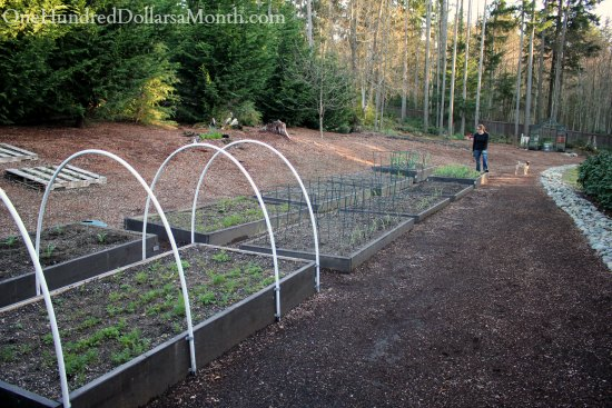 raised garden beds boxes