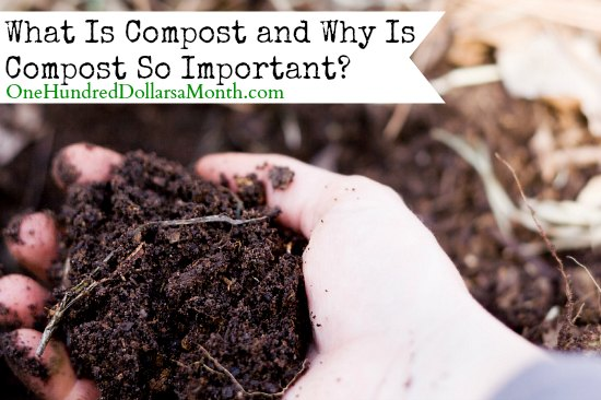 What Is Compost and Why Is Compost So Important