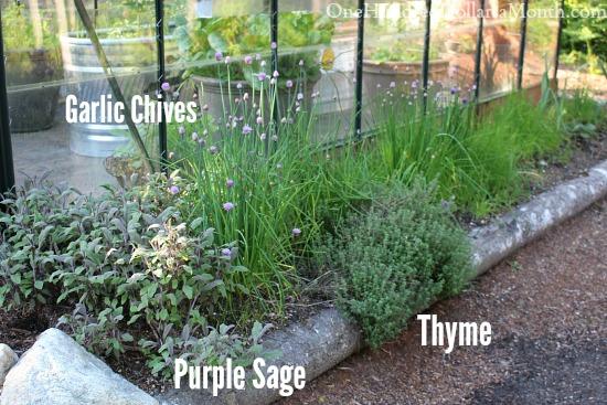 growing herbs in raised beds
