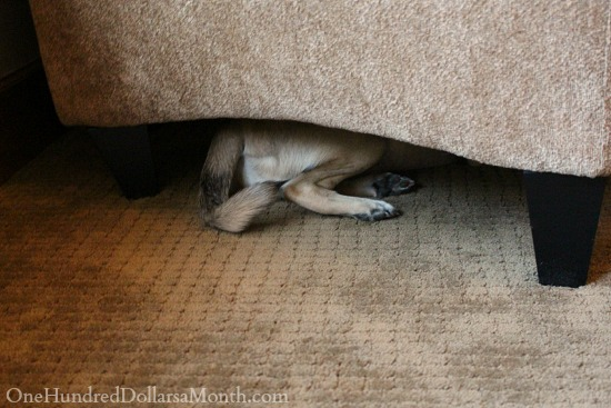 puppy hiding under chair
