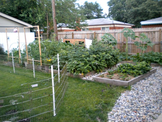 Garden pictures July 2014 021
