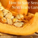 How to Save Seeds for Next Years Garden