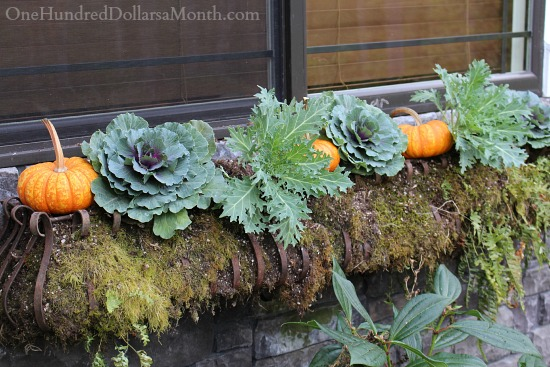 fall window box with pumpkins and cabbage