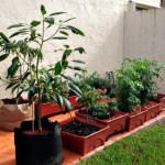 Mavis Mail – Genevieve From South Florida Sends in Garden Pics