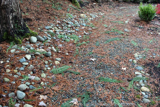 pine needles in garden