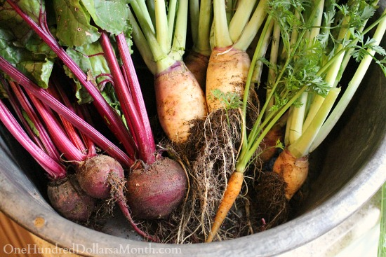 winter beets and turnips