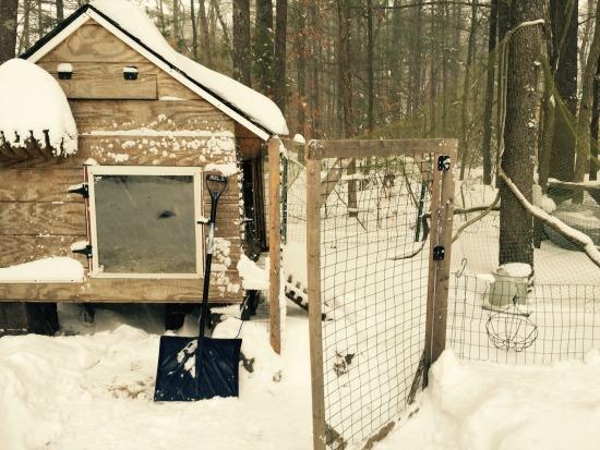 chicken coop in snow