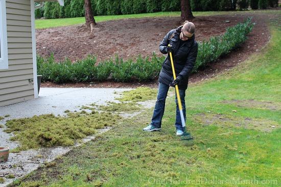 raking up moss