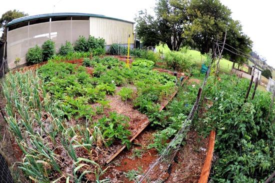 Lisa garden 1